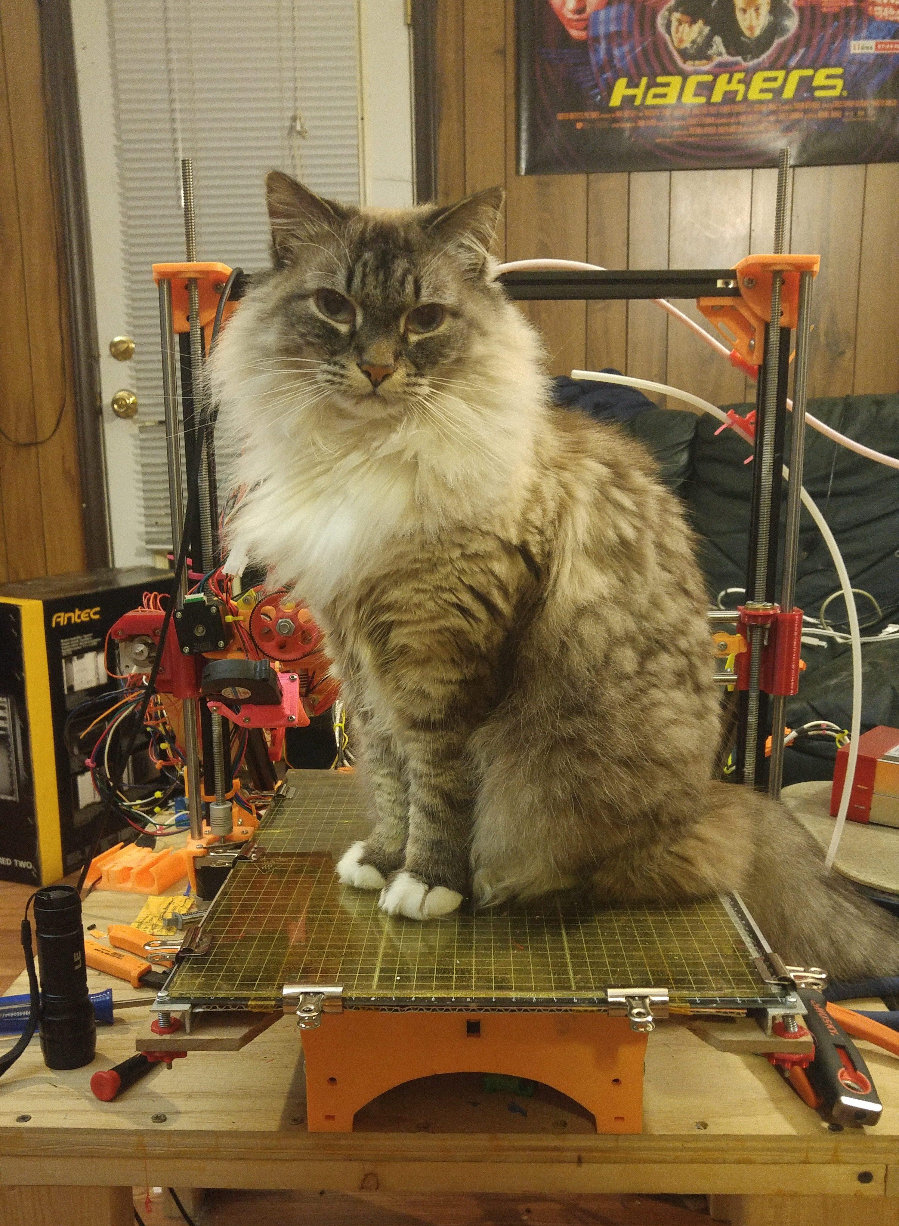 merlin the wizard cat sitting on my weird 3d printer